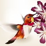 Beautiful vector realistic humming bird with flowers Stock Image