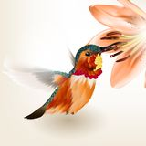 Beautiful vector realistic humming bird with lily Stock Photography
