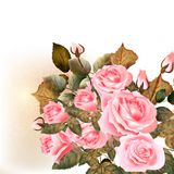 Beautiful vector roses painted in watercolor vintage style. Vector cute pink roses in vintage style for design Royalty Free Stock Photos