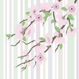 Beautiful vector sakura branch stock illustration