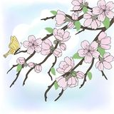 Beautiful vector sakura branch Stock Photography