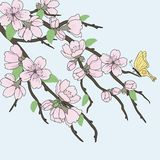 Beautiful vector sakura branch Royalty Free Stock Images