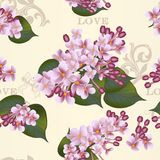 Beautiful vector seamless floral  pattern with lilac flowers Stock Image