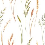 Wild field grass vector pattern. Beautiful vector seamless pattern with hand drawn watercolor wild field grass Royalty Free Stock Photography