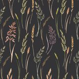 Wild field grass vector pattern. Beautiful vector seamless pattern with hand drawn watercolor wild field grass Stock Images