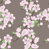 Beautiful vector seamless pattern with sakura royalty free illustration