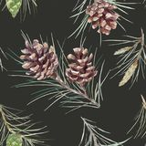 Watercolor fir cone vector pattern. Beautiful vector seamless pattern with watercolor fir cones Stock Image