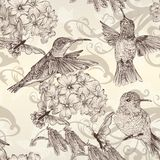 Beautiful Vector Seamless Wallpaper With Humingbirds In Vintage Royalty Free Stock Images