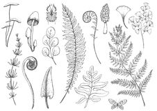Vector floral set. Beautiful vector set with hand drawn fern leaves Royalty Free Stock Photos