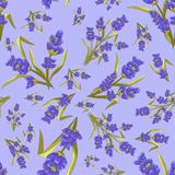 Beautiful vector violet lavender flowers pattern Royalty Free Stock Photos
