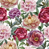 Beautiful vector watercolor pattern with peonies Royalty Free Stock Photo