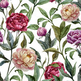 Beautiful vector watercolor pattern with peonies Royalty Free Stock Images