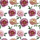 Beautiful vector watercolor pattern with peonies Stock Photography