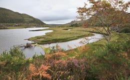 Beautiful vegetation near Upper Lake. Stock Photos