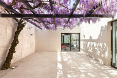 Beautiful veranda with wisteria. Architecture, modern house, beautiful veranda with wisteria Stock Photo