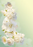 Beautiful vertical frame with a bouquet of white roses  with rain drops Stock Photography