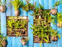 Beautiful vertical garden Stock Photos