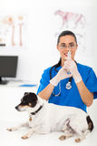 Veterinarian dog vaccination Royalty Free Stock Photos