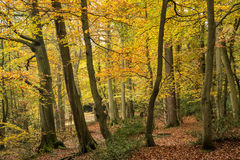 Beautiful vibrant Autumn Fall colors in forest landscape Stock Photos