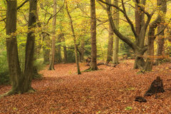 Beautiful vibrant Autumn Fall colors in forest landscape Royalty Free Stock Image
