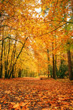 Beautiful vibrant Autumn Fall forest Stock Photo