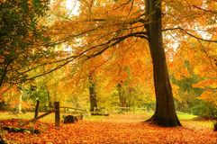 Beautiful vibrant Autumn Fall forest Royalty Free Stock Photography