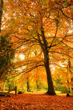 Beautiful vibrant Autumn Fall forest Stock Photos