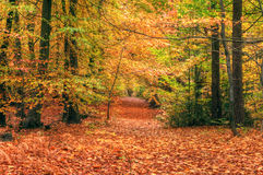 Beautiful vibrant Autumn Fall forest scene Stock Image