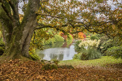 Beautiful vibrant Autumn Fall landscape overlooking lake Stock Photos