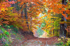 Beautiful vibrant Autumn Fall Leaves colors in forest landscape Stock Image