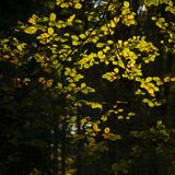 Beautiful vibrant Autumn Fall trees in Fall color in New Forest. Stunning vibrant Autumn Fall trees in Fall color in New Forest in England with beautiful royalty free stock photography