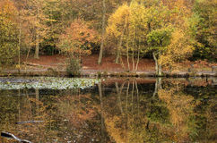 Beautiful vibrant Autumn woodland reflecions in calm lake waters Royalty Free Stock Photo