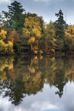 Beautiful vibrant Autumn woodland reflecions in calm lake waters Stock Images