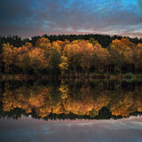 Beautiful vibrant Autumn woodland reflecions in calm lake waters Stock Photos