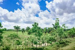 Beautiful vibrant background consisting of trees of the rain forest of Central America. Typical landscape of Dominican Stock Photo
