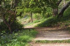 Beautiful vibrant landscape image of footpath through English wo Royalty Free Stock Image