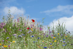 Free Beautiful Vibrant Landscape Image Of Wildflower Meadow In Summer Stock Photos - 97472293