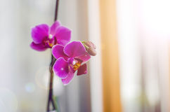Beautiful Vibrant Orchids Royalty Free Stock Photography