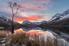 Beautiful Vibrant Pink And Orange Winter Sunrise At Buttermere In The Lake District, UK. Buttermere's famous lone tree on a stunning winter morning with vibrant stock images