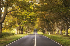Beautiful vibrant road in Autumn Fall landscape forest countrysi Royalty Free Stock Photos