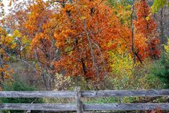 Vibrant Rust Colored Autumn Trees with an Old Fence stock photography