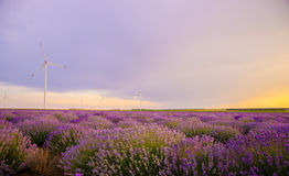 Beautiful vibrant sunset over a lavender field with wind turbine. Bulgaria stock photography