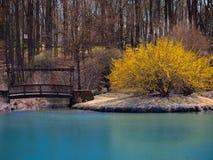 Beautiful Vibrant Yellow Bush on Island royalty free stock image