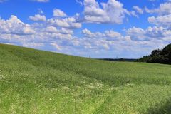 Beautiful view on an agricultural crop field on a sunny day with a blue sky and some clouds royalty free stock photography