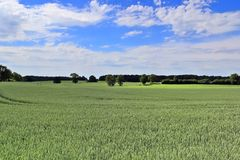 Beautiful view on an agricultural crop field on a sunny day with a blue sky and some clouds stock image