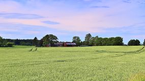 Beautiful view on an agricultural crop field on a sunny day with a blue sky and some clouds stock images