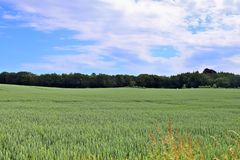 Beautiful view on an agricultural crop field on a sunny day with a blue sky and some clouds royalty free stock images