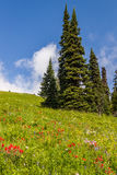 Beautiful view of the Alpine meados at Sun Peaks Stock Image