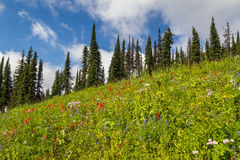 Beautiful view of the Alpine meados at Sun Peaks Stock Photography