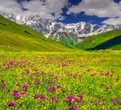 Beautiful view of alpine meadows in the Caucasus mountains. Stock Photography